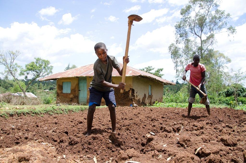 Sponsored child Julius farming