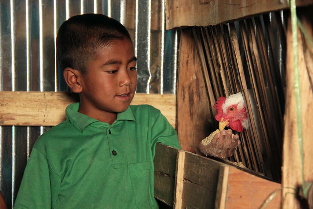 Chicken farming in India