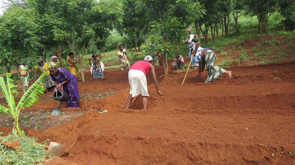 Vegetable garden in Tanzania