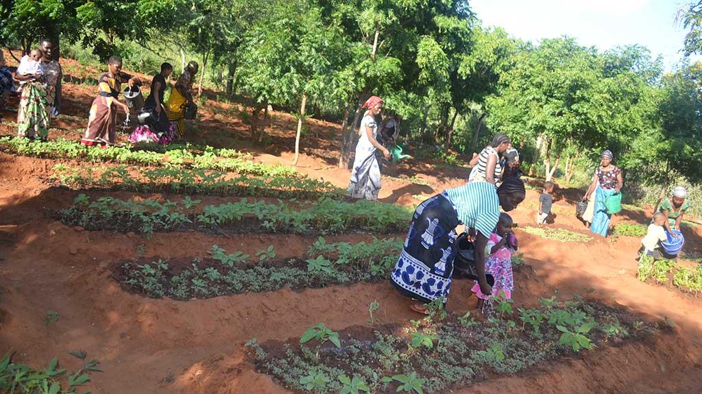 Growing produce in Tanzania