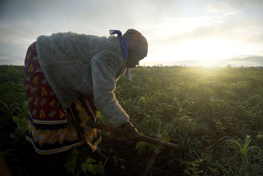 Grandma farming in Kenya